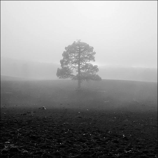 arbreCarre