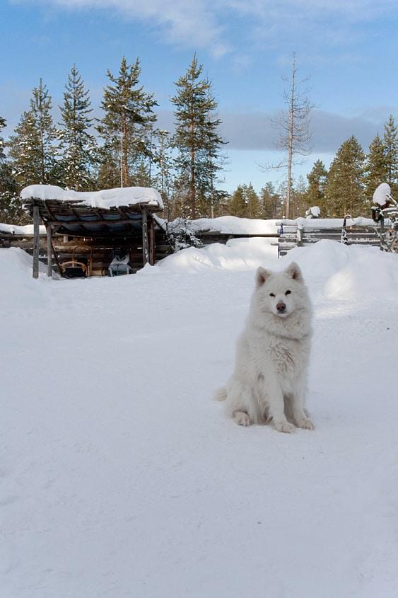 Propulsion canine
