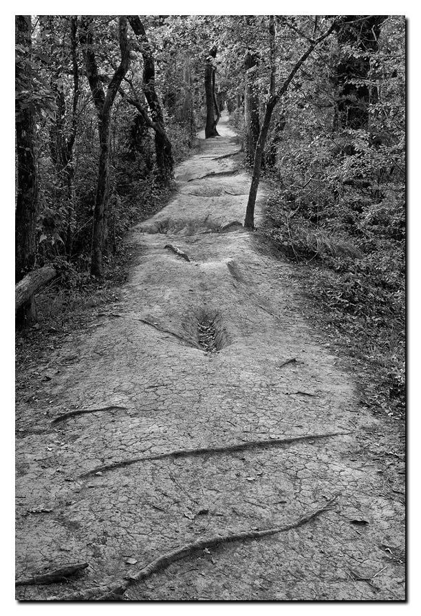 Em-Bûches forestières
