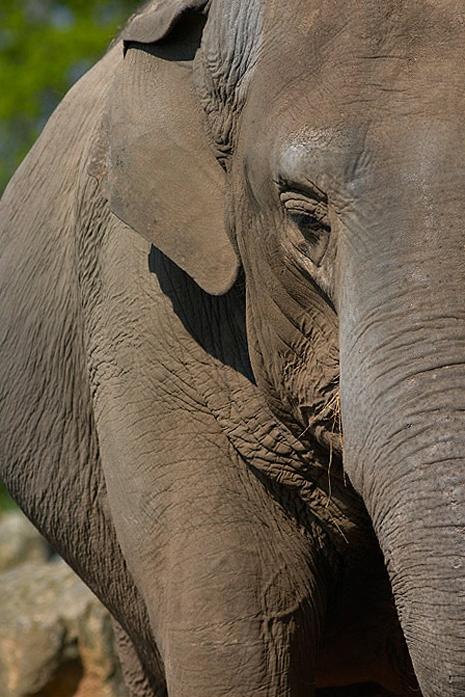 pgalleryelephant
