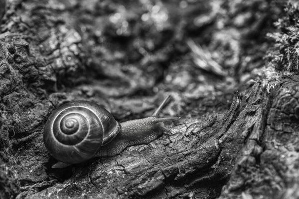 Petit escargot… porte sur son dos…