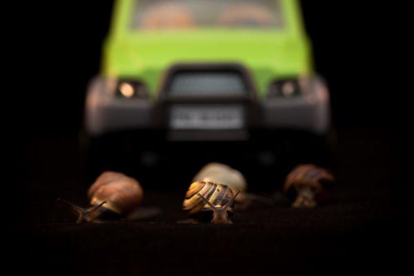 Opération escargots